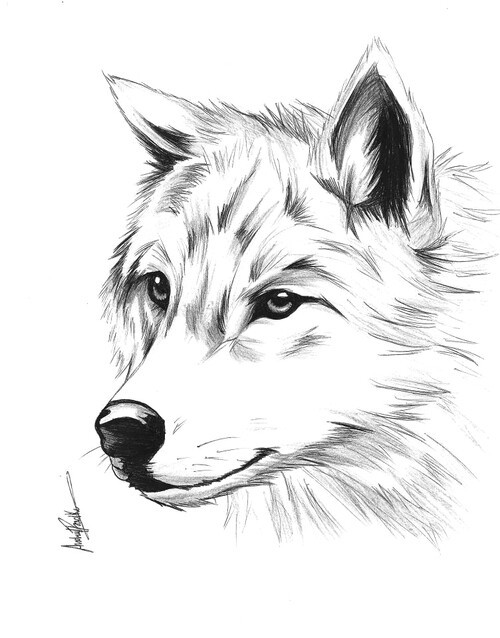 Wolf Love Drawings Cute Pictures To Pin On Pinterest
