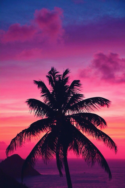 beach, palm, palm trees and pink