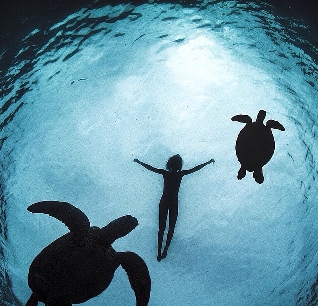animal, beautiful, blue, boy, dive, free, friends, girl, kid, love, nature, ocean, relax, sea, swim, together, turtle, water