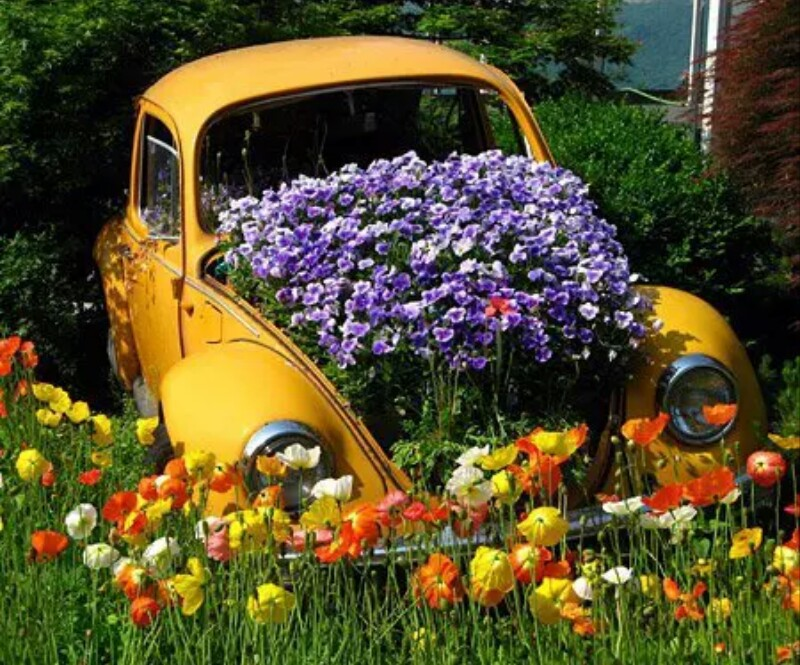 beautiful, flowers, meadow, old car, purple, spring, vw