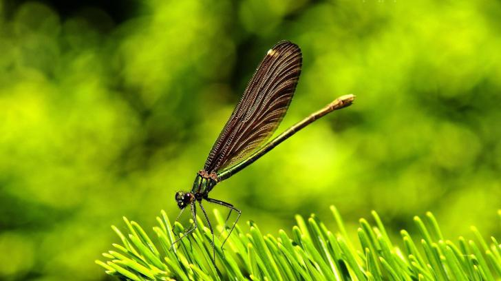 bacground, dragonfly, grass and green