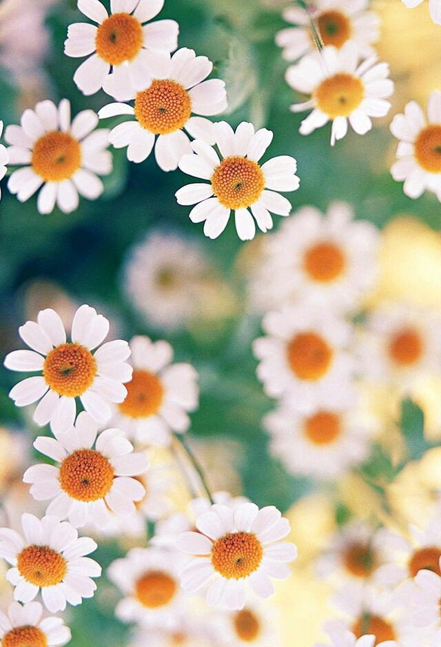 cute, flowers, nature and pale