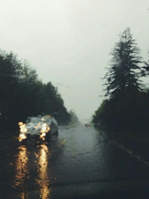 black, car, forest, light, rain, sad, unhappy