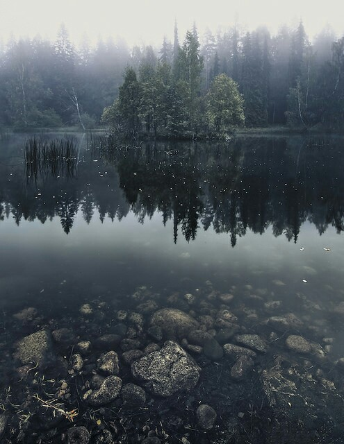 forest, landscape, nature, pretty, scenery, water, ​beautiful