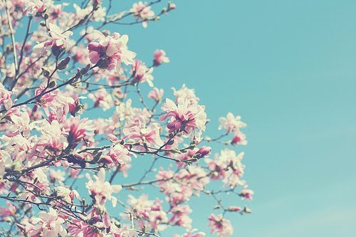 blossoms, bright, flowers and happiness