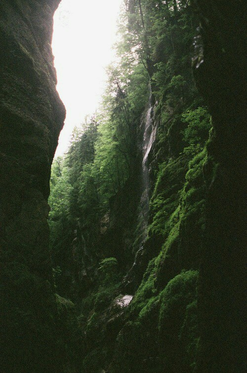 adventure, canyon, forest, greem, nature, plants