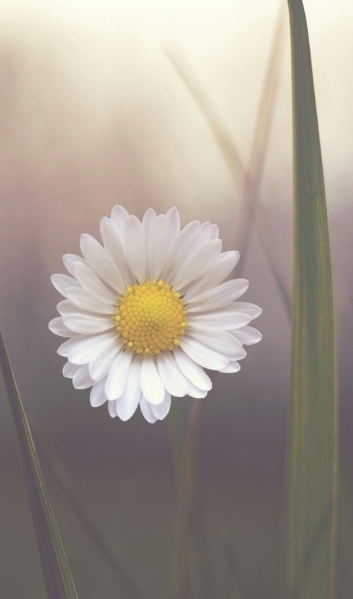 vintage, summer, daisy and cute