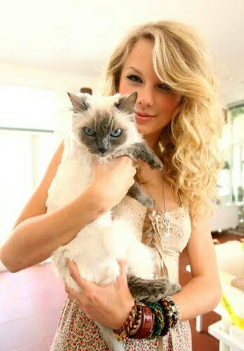 big, cat, cute and famous