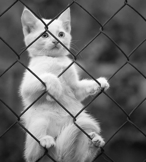 animal, black and white, cat and cute