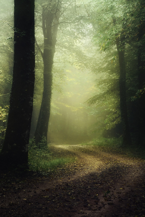 beautiful, dreamy, fog, forest, landscape, leaves, mist, mistery, misty, nature, road, trees, woods