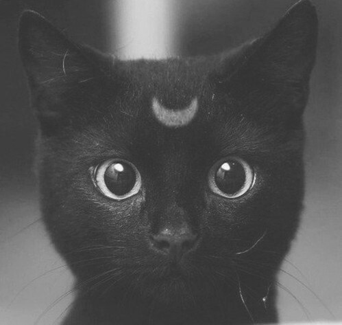 animal, black, cat and cute