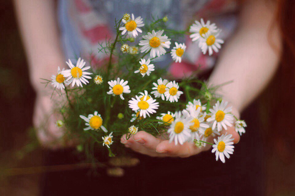 beautiful, chamomile, flowers, grunge, like, love, nature, russia, tumblr