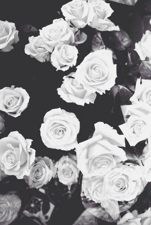 Black Rose Wallpaper Cute