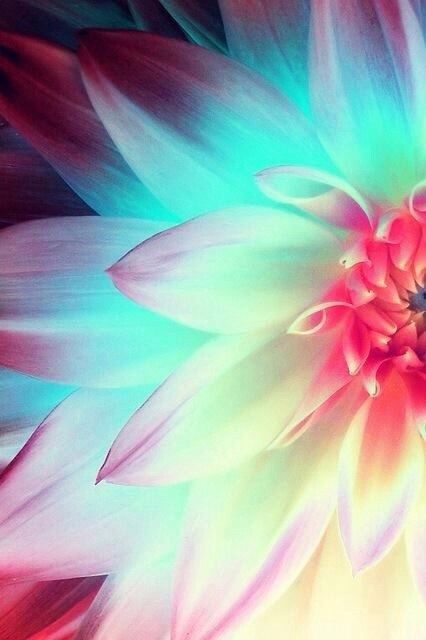 beautiful, bright, flower, fluorescent, nature - image ...