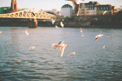 birds, bridge, fly and see the world