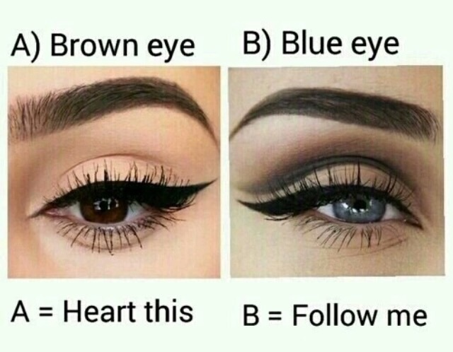beauty, blue, brown and chic