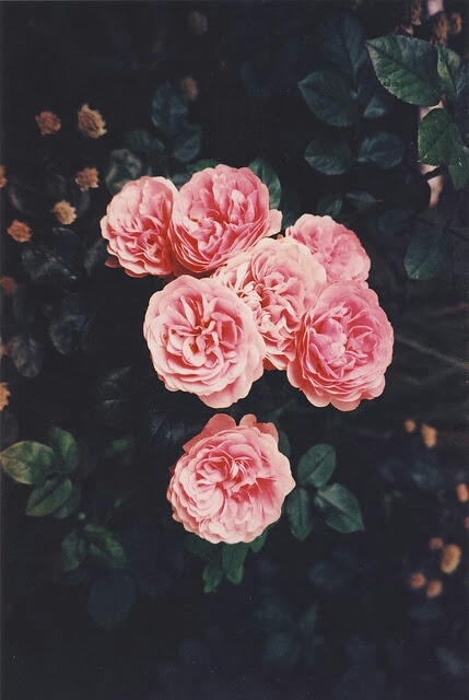 Backgrounds Flowers Girly Pink Tumblr Image 3703467