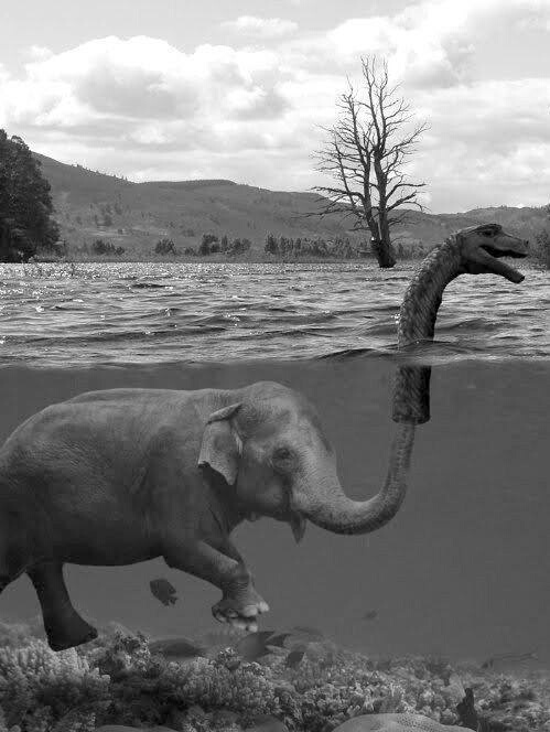 black and white, elephant, funny, loch ness, monster, nessie, photography, underwater