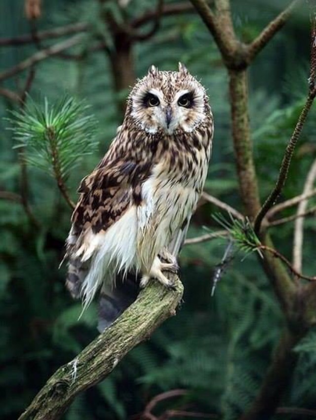 animal, bird, forest and nature